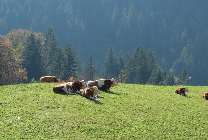 Tierleid – Grüne fordern mehr Regionalität statt Tiertransporte, 381