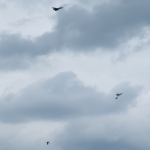 Eurofighter-Tiefflug-Bundesheer-Samitzteich-Graz-Dogfight